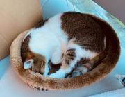 Tomofun_友愉股份有限公司 【#和貓貓一起工作,療癒身心~】