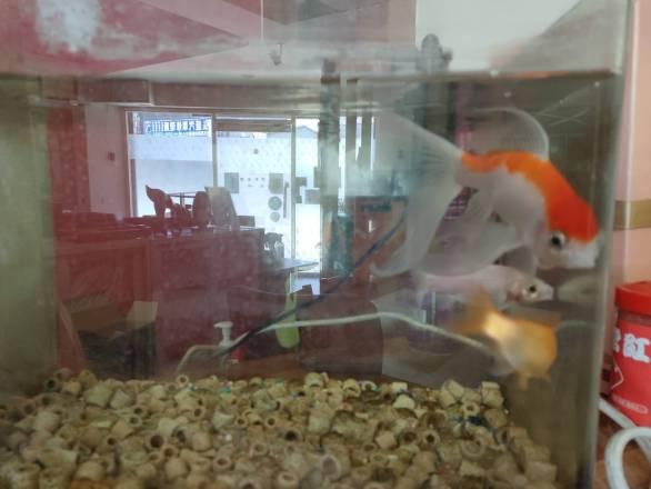 魯乃綸地政士事務所 【公司有養魚放鬆一下心情,公司的飲水機都是用新的華生水桶唷!】